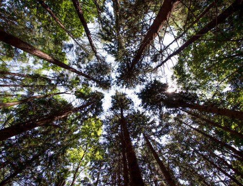 Trees FAQ
